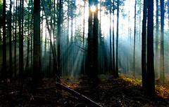 Enlightenment (Harpagornis~) Tags: wood morning autumn trees light shadow sun nature beauty germany amazing illumination harmony rays enlightenment satori questfortherest epiphany brainwave superhearts