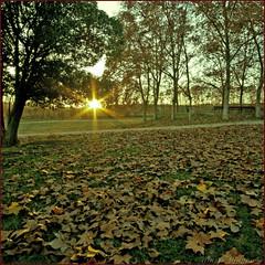 Sol (m@®©ãǿ►ðȅtǭǹȁðǿr◄©) Tags: españa naturaleza sol canon sigma natura catalunya cataluña espanya ripollet vallèsoccidental canoneos400ddigital m®©ãǿ►ðȅtǭǹȁðǿr◄© sigma10÷20mmexdc marcovianna imagenesderipollet fotoderipollet