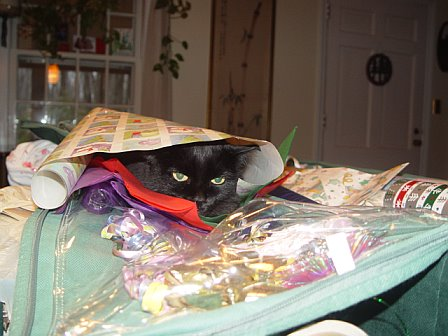 Free: One cat, gift wrap included