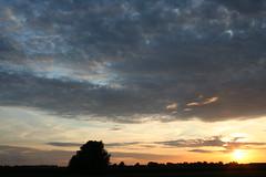 op zoek naar een warm oord (Maas-Jan) Tags: sunset sky sun birds canon fly zonsondergang vogels ganzen lucht zwart zon eos350 vliegen