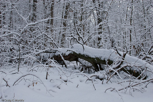 Winter Scene-3