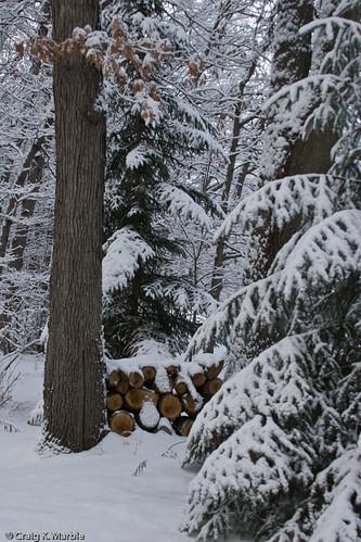 Winter Scene-4