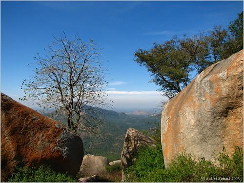 Tree&Rocks