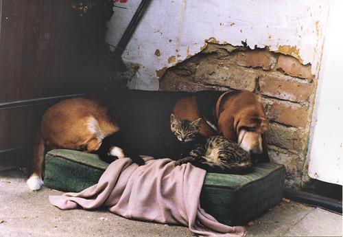 dog cats slr hound basset zenit