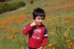 My crazy son, with poppies.