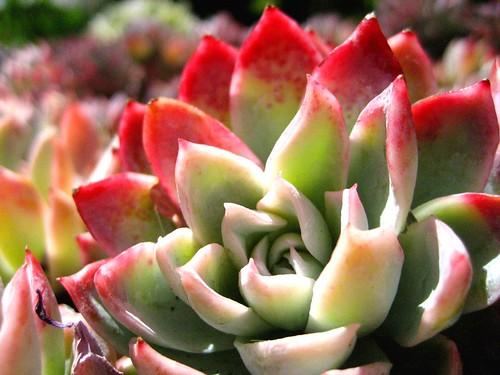 pretty plant - Pretty Plants
