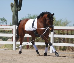 NaKai on the Lunge Line