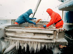 Icicle_Sorting (coreyfishes) Tags: ocean sea snow color ice dutch weather alaska danger harbor photo fishing fisherman king arnold picture wave crab corey catch kingcrab discovery harsh beringsea crabbing rollo bering snowcrab opilio deadliest deadliestcatch coreyfishes
