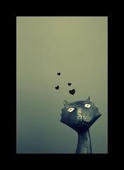 (.donna.dark) Tags: cat inlove taip taip2 taip5 taip7 taip10 taip3 taip6 taip9 fotofiltroauksas taip4wcmcwi katodas taip8konung