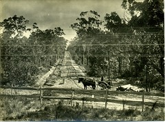 Hare Street, Glenbrook (Blue Mountains Local Studies) Tags: blue horses mountains sam fences australia nsw hood roads buggies gravel glenbrook postandrail xmlns:dc=httppurlorgdcelements11 dc:creator=httpnlagovaunlaparty587349