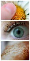Day 242 (Linaline) Tags: portrait macro eye girl canon 50mm greeneye daisy freckles 365 xsi