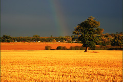 Under the rainbow - rush hours on M25 (Ben124.) Tags: autumn trees landscape rainbow traffic searchthebest soe m25 naturesfinest supershot rushhours abigfave shieldofexcellence platinumphoto flickrdiamond megashot excellentphotographerawards photofaceoffwinner photofaceoffplatinum theperfectphotographer pfogold fotocompetition fotocompetitionbronze fotocompetitionsilver fotocompetitiongold