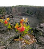 from rotten to magic (Xuan Che) Tags: road travel november red flower green island volcano hawaii lava nationalpark big bed flora crater bigisland geology canonixus400 2007 worldheritage oceania
