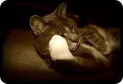 Rub - a - dub dub... (NikkiRMZ) Tags: cecil cat bestofcats warm fuzzy pet pets animal animals friendly fur furry cats kitty kittycat grey white tiger tuxedo paw paws