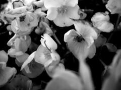 when the spring is cold (Anitah) Tags: travel flowers vacation blackandwhite bw flores frias pb curitiba jardimbotnico viagem pretoebranco anitah nlackandwhite anages