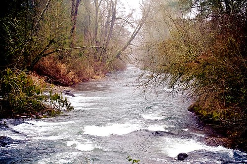Down River - where Crabtree Creek and Roaring river meet near Scio, Oregon