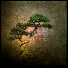 feeling hope bonsai (Martine Roch) Tags: plant tree nature beautiful photoshop shoe contest bonsai layers soe justimagine petitechose martineroch textureforlayersgroup