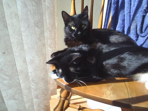 Two kitties, one chair