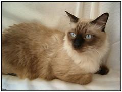 Tom (*Toia*) Tags: catnipaddicts
