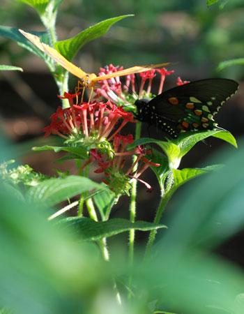 Artsy butterfly shot