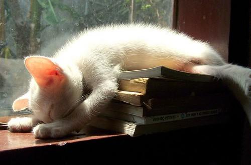 take a nap..... by ini aku dita....