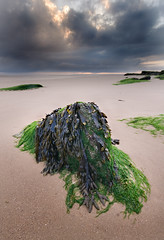 Waiting For The Tide To Turn (BarneyF) Tags: sky seaweed beach rock landscape wirral westkirby merseyside hilbreisland deeestuary superaplus aplusphoto diamondclassphotographer betterthangood