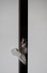 the shinning (mar ar) Tags: door white black cute blanco look cat jack grey gris trapped puerta open negro ojos gato stare felino mirada asesino shinning mistery misterio ayuda curro hocico resplandor nickolson atrapado a3b