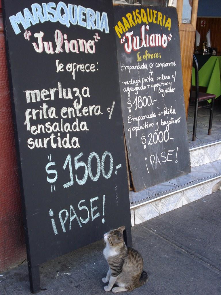 Gato hambriento