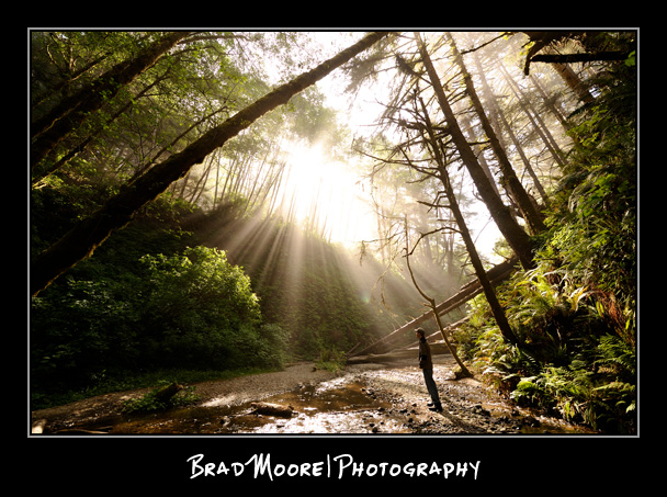 Redwoods_God_Beams