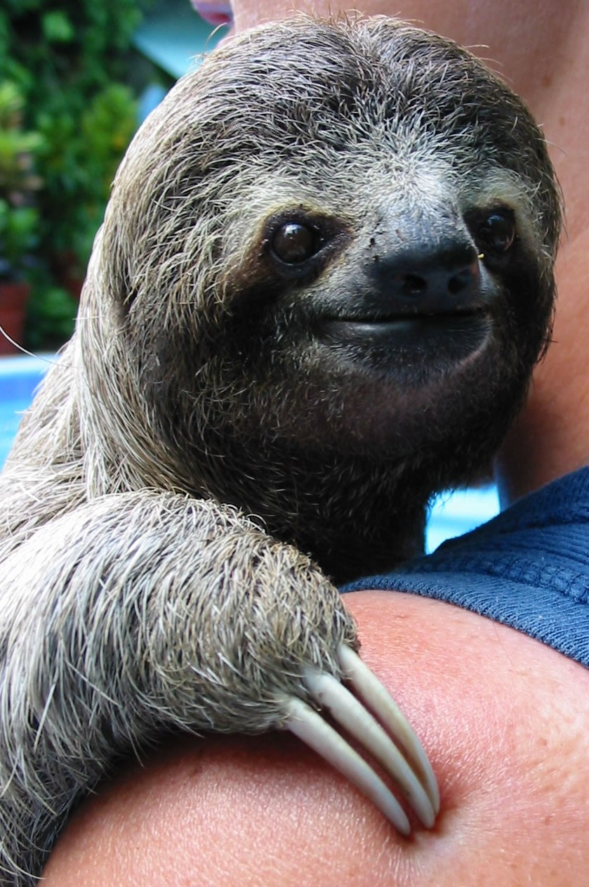 The Daily Weird 1 potty Training Sloth