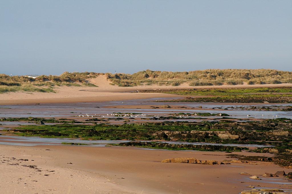 Dornoch Beach (looking north towards Embo)