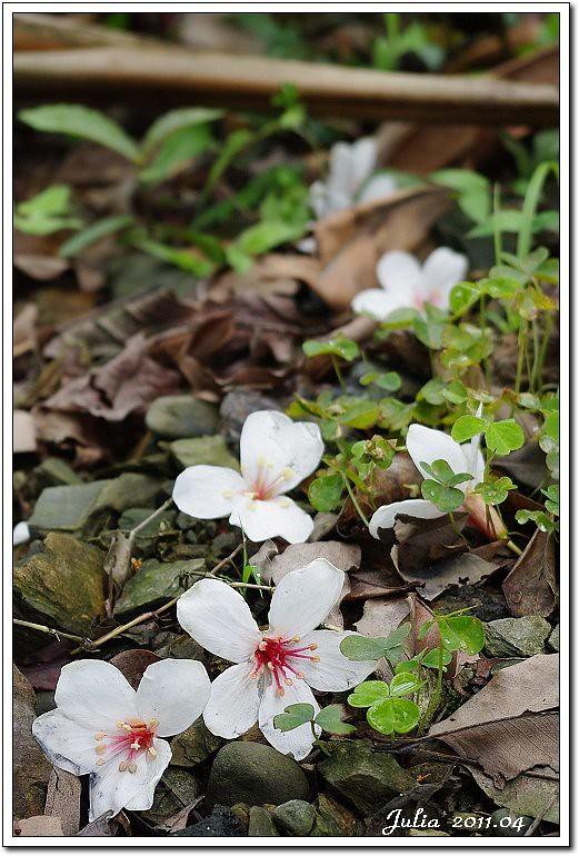 仁山植物園 (10)