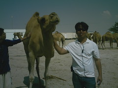 friendly guy (1676) Tags: life tree bahrain al fort camels sights zallaq areen riffa