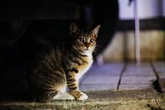 2037/1743*:+^z] (june1777) Tags: street night cat canon eos 50mm momo rainyday f14 tabby snap e seoul 5d 3200 ef straycat jongro theperfectphotographer