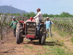 Tractor in the vineyards