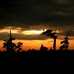 Shadow.. (f & b) Tags: sunset tree sol del america soleil louisiana tramonto sonnenuntergang ombra coucher sombra pantano ombre swap swamp amerika puesta marais schatten palude agac redish sumpf gunbatimi kizil aplusphoto mailciler