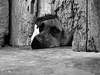 Pensamientos Caninos / Dog Thoughts (Pankcho) Tags: door dog pet cute abandoned blancoynegro face look puppy blackwhite puerta eyes gate sad floor hole venezuela cara caracas perro explore triste ojos cachorro stray cerca mirada mascota piso abandonado hueco callejero tierno hatillo abigfave perfectangle asomado 20tfanimales ccs8 yatengofotodeflorecitasgaticoyperritonadamásmefaltaunadeunbebé