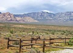 Visit the American Southwest! (singleeyephotos) Tags: redrockcanyon southwest lasvegas burro americansouthwest