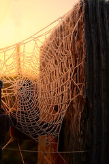 Web of Intrigue (torimages) Tags: glastonbury somerset sd allrightsreserved lifethrualens donotusewithoutwrittenconsent copyrighttorimages
