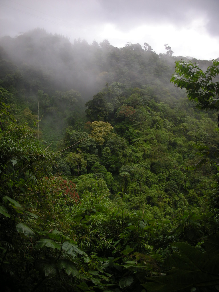 Costa Rican rainforest