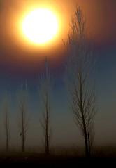 Sun or Fire???