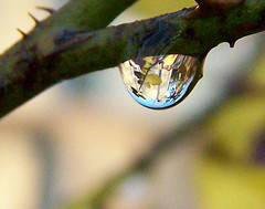 jalie in a drop (aaheart2heart) Tags: color macro reflection girl dof drop refraction droplet raindrop naturethroughthelens