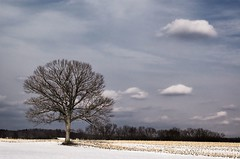 Winter Conversation (Pappagalla) Tags: winter cold tree nature clouds landscape hadley westernmassachusetts pioneervalley 7pointsystem