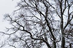 ryoku_de_5810 (ashesmonroe) Tags: wood november schnee trees winter wild sky detail tree nature leaves forest germany deutschland herbst holz bäume baum badenwürttemberg canonef50mmf18ii hohenlohe badenwrttemberg eckartshausen ilshofen landkreisschwäbischhall b¦ume landkreisschw¦bischhall