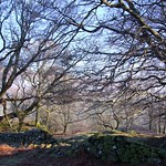Woodland walk thumbnail