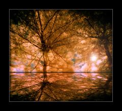 It's almost golden (but it's not autumn) (Elf-Y) Tags: reflection tree golden bravo infrared firstquality moddedcanon5d