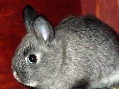 Emily Bunny ~ transporting to her new home (Lara's  Stuff) Tags: bunny emily alittleprivacyplease geethanksmom freesortafertilizer coveryoureyessheisinherpottyplace