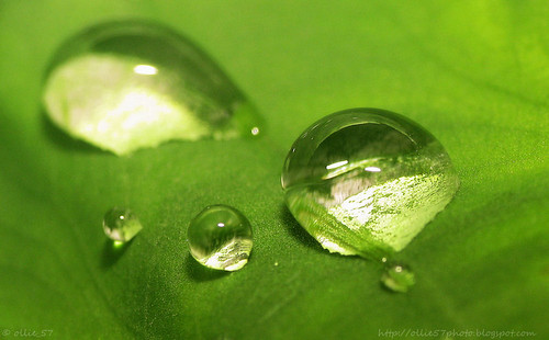 Water droplets on a Leaf (Cropped)