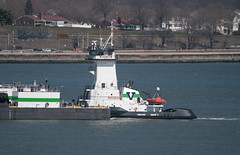 BRANDYWINE in New York, USA. March, 2008 (Tom Turner - SeaTeamImages / AirTeamImages) Tags: city nyc usa newyork green brooklyn port bay harbor boat marine harbour transport vessel pony maritime transportation tugboat tug statenisland tomturner