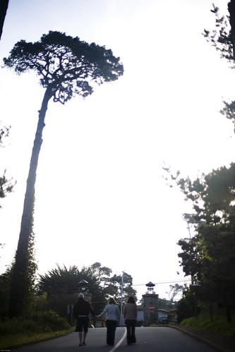 Monterey043